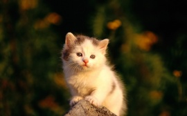 Watching Poor - cats wallpaper