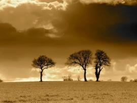 Three Trees Horizon - other wallpaper