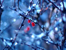 Frozen fruits in winter - winter wallpaper