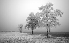 Frozen field and trees - Зима обои