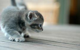 Kitten scouting - cats wallpaper