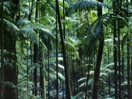 Tamborine Park - australia wallpaper