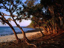 tea tree beach noosa - australia wallpaper