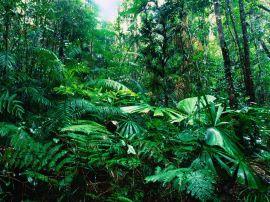 Lacey Creek forest - australia wallpaper