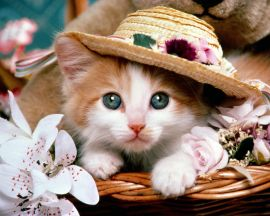 Cat with a hat - cats wallpaper