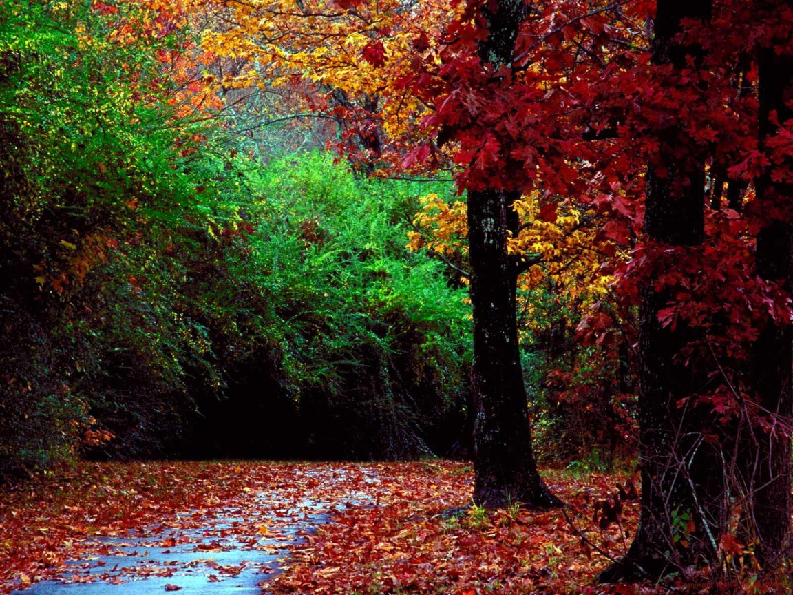 http://saversplanet.com/wallpapers/autumn-forest-wallpapers_1066_1152.jpg