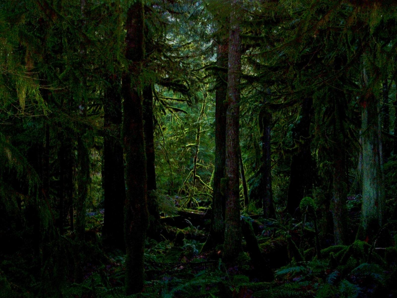 Dark Forest Wallpaper Saversplanet Com