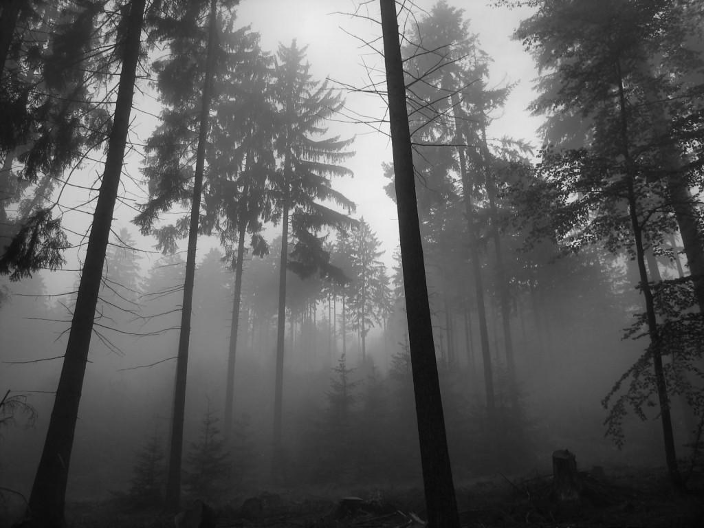 Forest Fog Wallpaper Saversplanet Com
