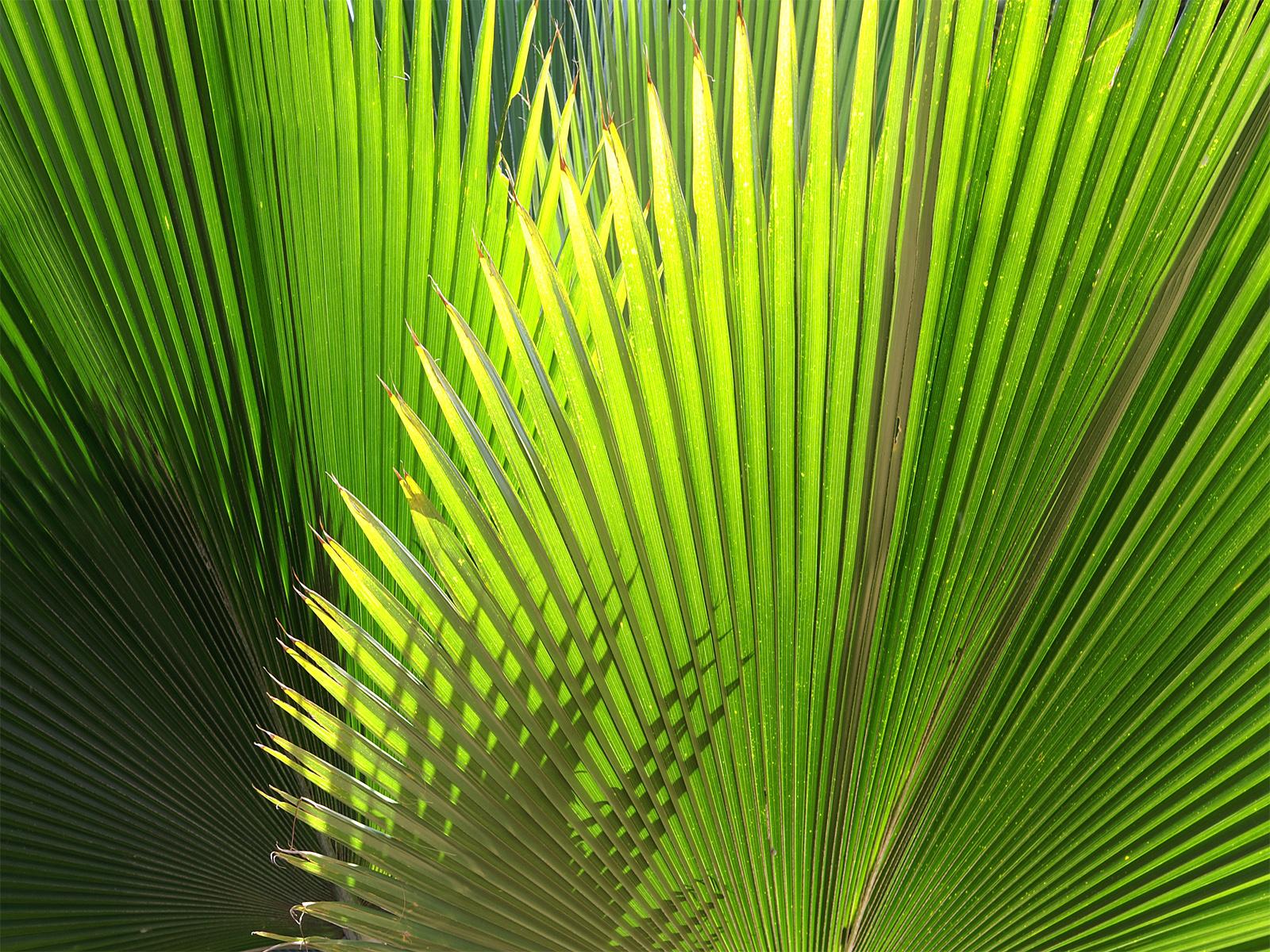 Green Plants In Farm Desktop Wallpapers - 7 Real Time Wallpapers ...