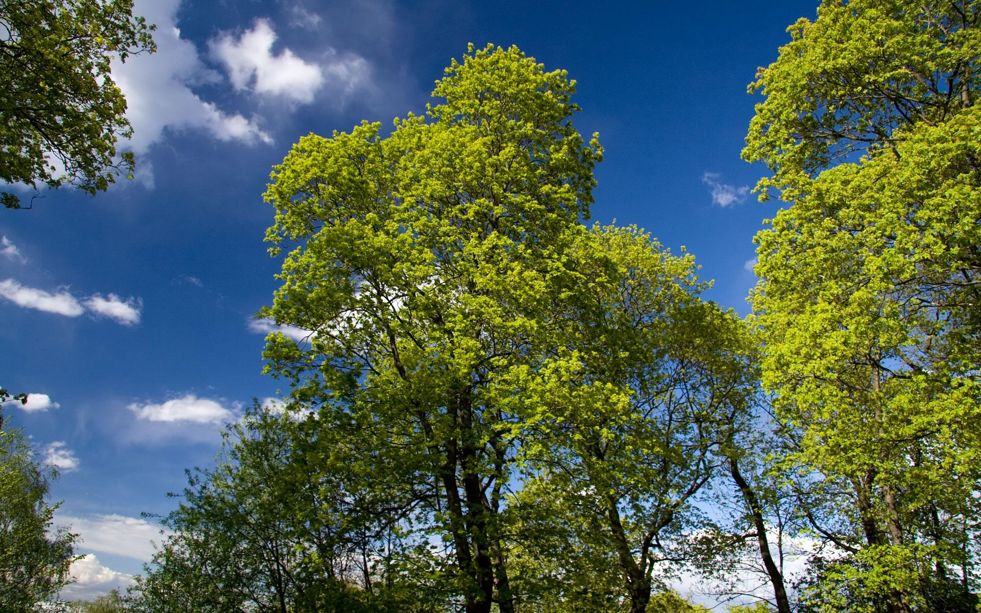 spring trees background - photo #29