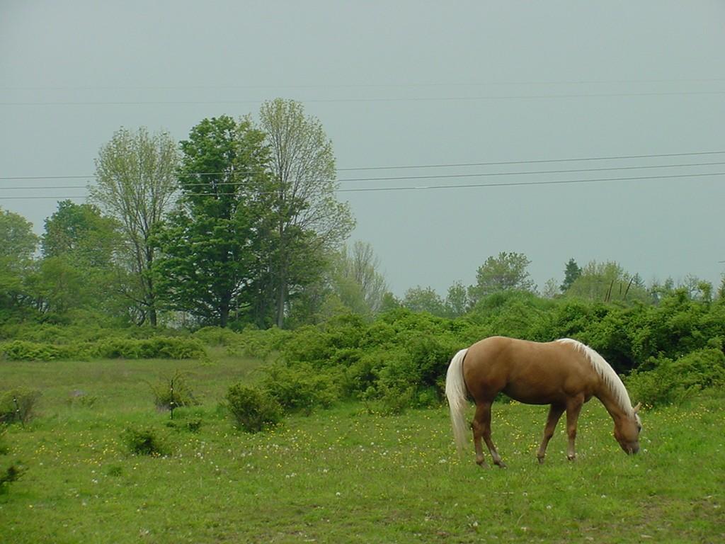 Horse Nature Wallpaper Saversplanet Com