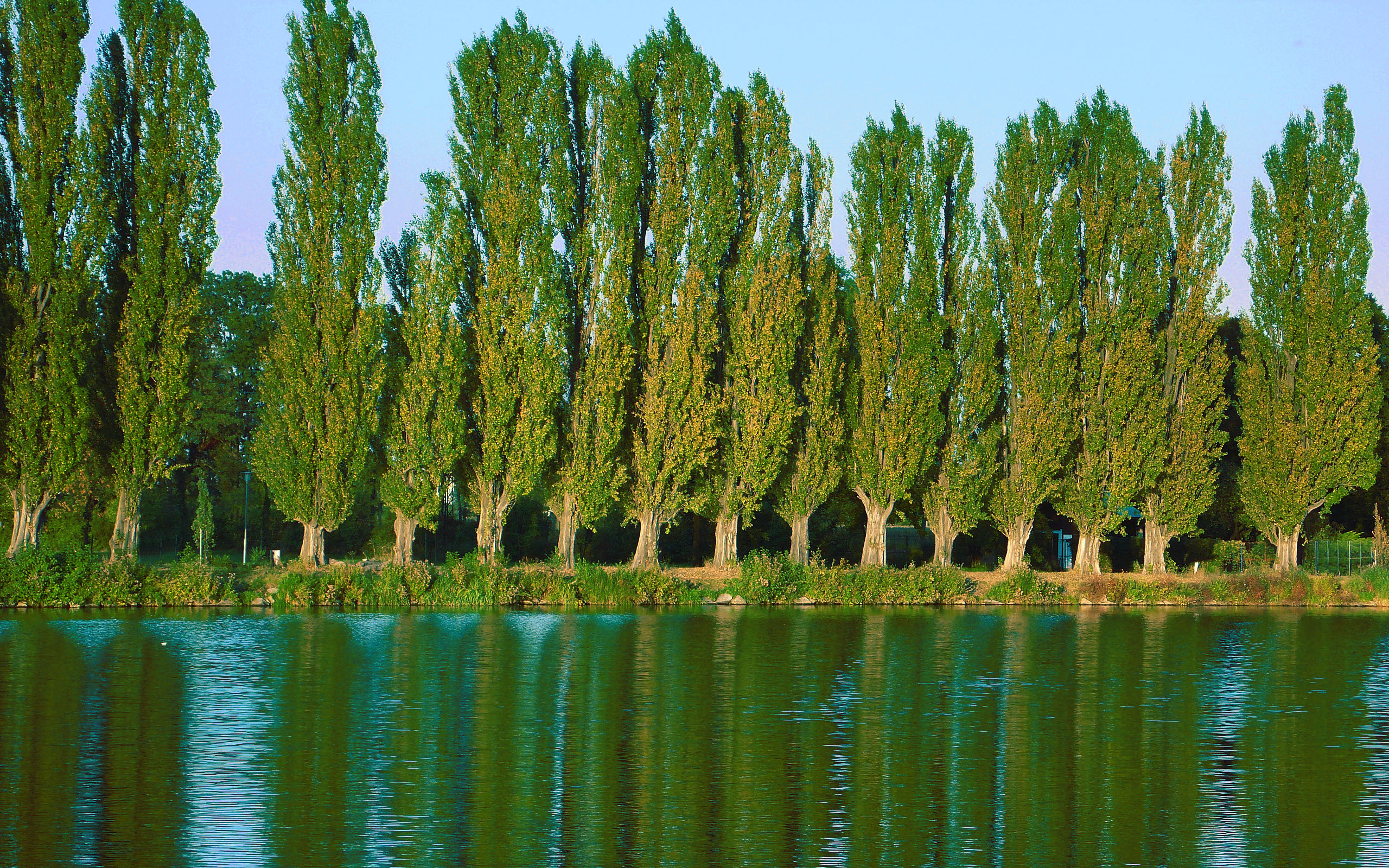 Фото дерев для дітей 15 фотография