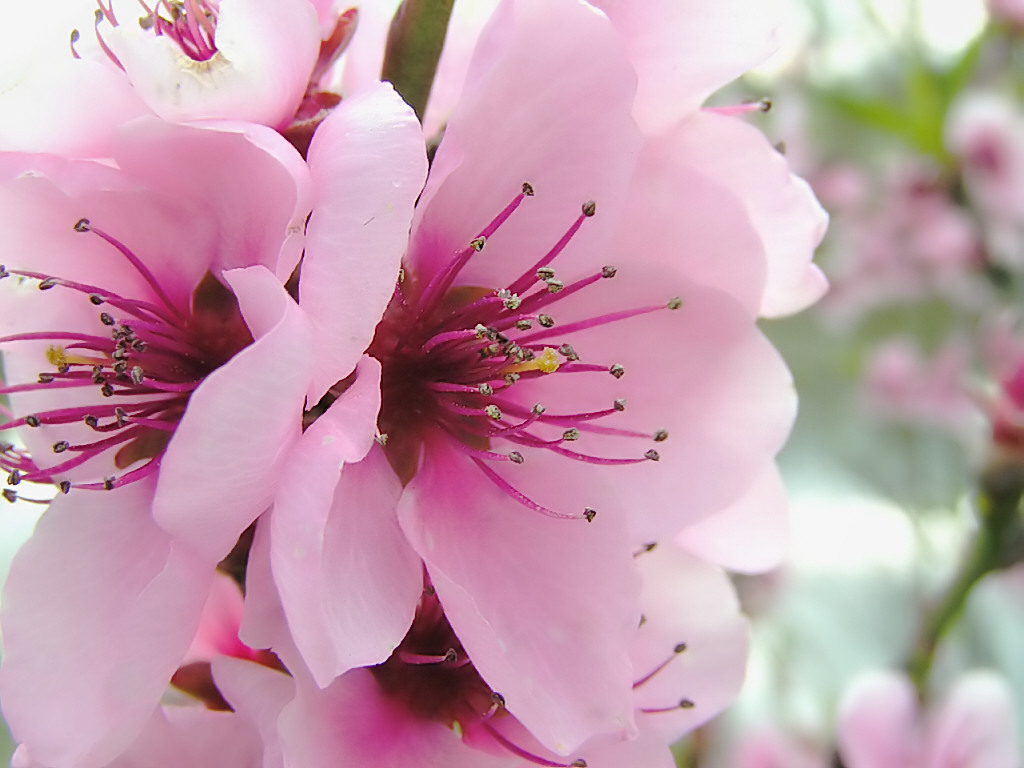 Free screensavers and wallpapers kscreensavers spring flowers spring wallpaper mightylinksfo