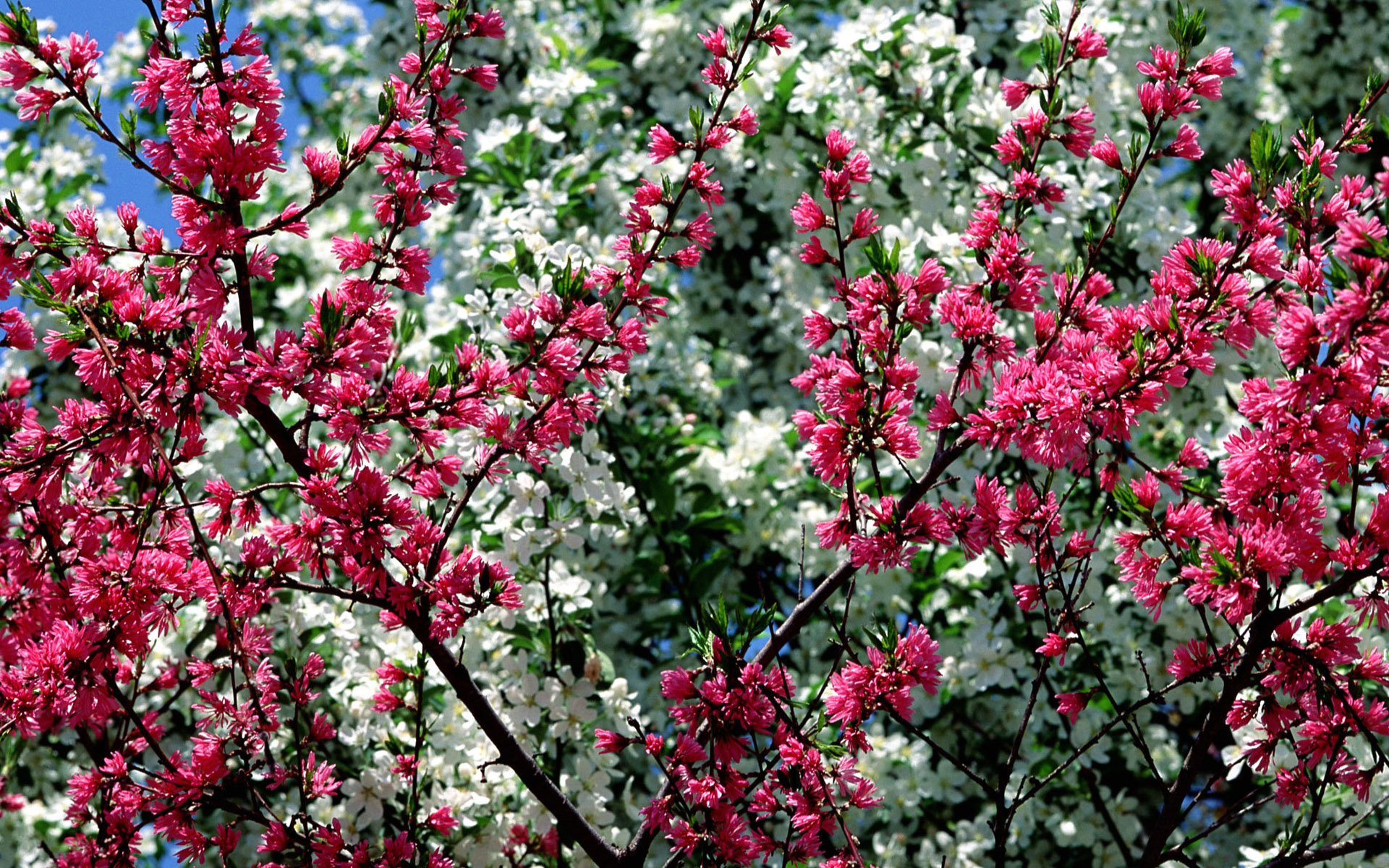 spring flowers wallpapers - photo #42