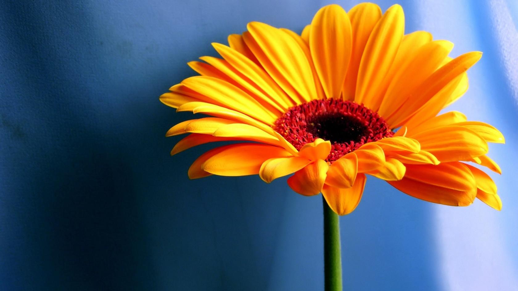 Flowers Wallpapers Saversplanet